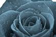 canvas print picture - flor rosa efecto vintage