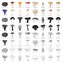 Mushroom Set Icons In Cartoon Style. Big Collection Of Mushroom Vector Symbol Stock Illustration