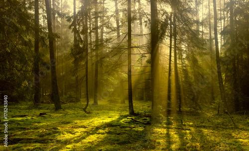 jesien-w-lesie-warmii