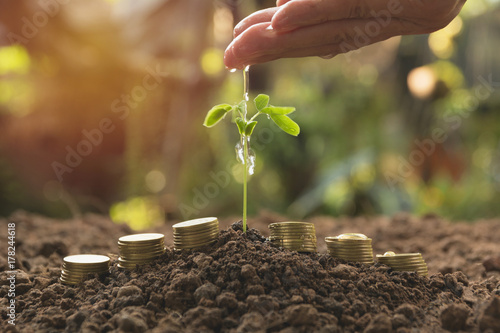 Fotobehang Planten Pouring a young plant from hand with stack coins. Gardening and watering plants. Business growing concept.