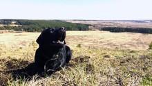 Black Pet Dog Labrador Retriev...