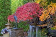 Home Garden Backyard Fall Colo...