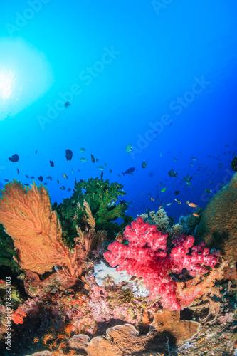 Plakat Zdrowe koralowce twarde i miękkie koralowce na tropikalnej rafie