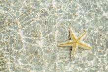 Close Up Of Yellow Starfish Underwater On White Sand