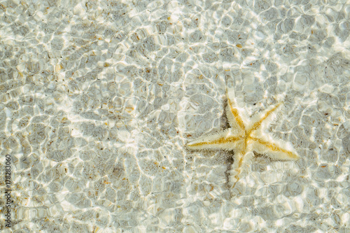 Close up of yellow starfish underwater on white sand