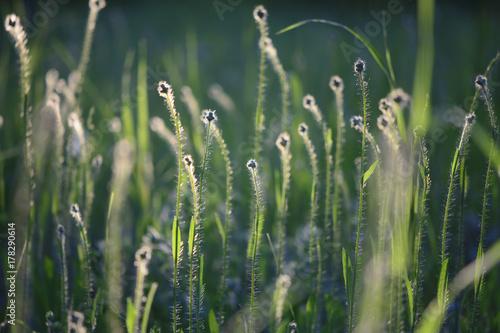 Close-up of summer grass