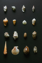 Shell Collection.