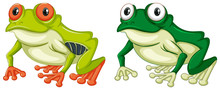 Two Green Frogs On White Backg...