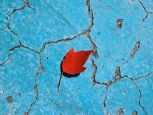Fallen Red Leaf In Empty Blue ...