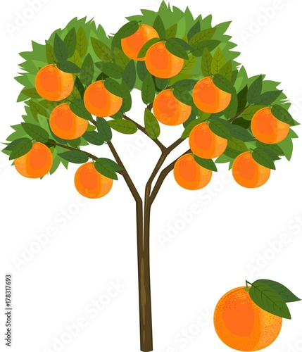 Vászonkép Orange tree with green leaves and ripe orange fruits on white background