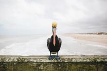 Pelican On An Ocean Pier