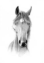 Freehand Horse Head Pencil Dra...