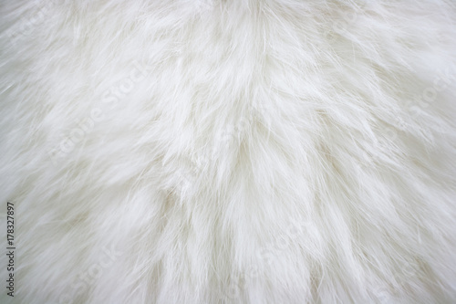 Texture of natural long-haired white fur. Fototapete