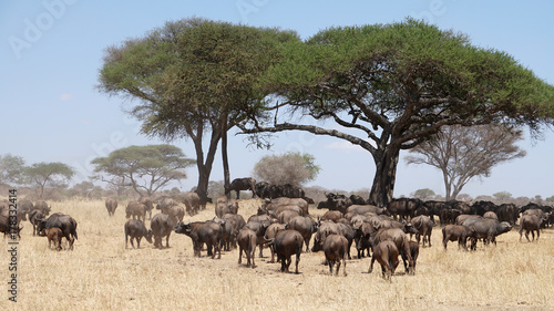 Keuken foto achterwand Baobab Safari Tarangire Nationalpark Tansania