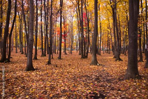 Recess Fitting Magenta autumn foliage scenic