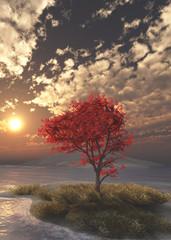 Obraz na Szkle Krajobraz Maple Tree at Sunset