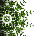 Abstract Green Background, Wild Climbing Vine Liana Plant With Kaleidoscope Effect On White Background.