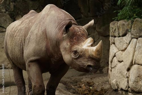 Aluminium Prints Rhino 動物園のサイ