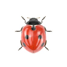 Ladybug On White. 3D Illustrat...