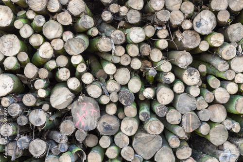 Plakat Drewno przekroju drzewa drzewa stos