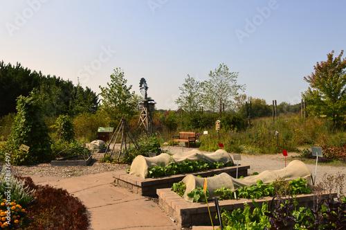 Plakat Doniczki warzywne w ogrodzie