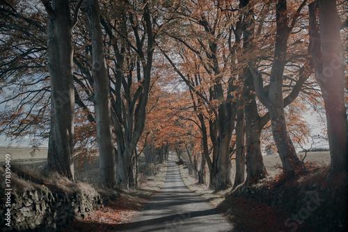 Autumnal Road - 178390409