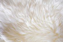 Soft Shiny Sheep Wool