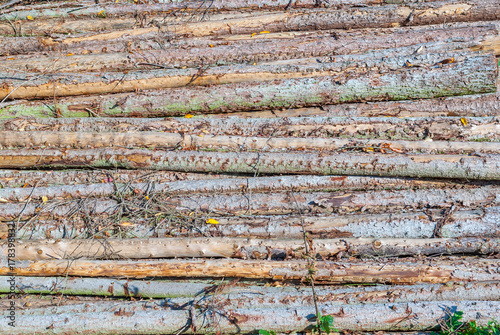 Zdjęcie XXL Stos drzew drewna