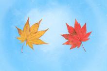 Japanese Autumn Maple Leaf On Blue Ice