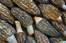 Morel Mushrooms Lined Up And I...