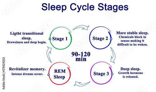 Photo  Sleep Cycle Stages