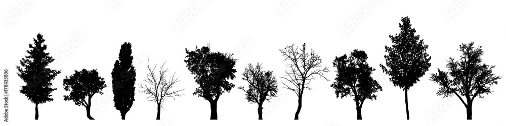 Fototapety, obrazy: Vector silhouette of tree on white background.