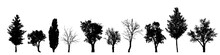 Vector Silhouette Of Tree On W...