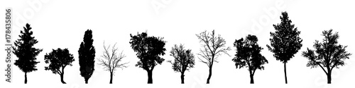 Foto  Vector silhouette of tree on white background.