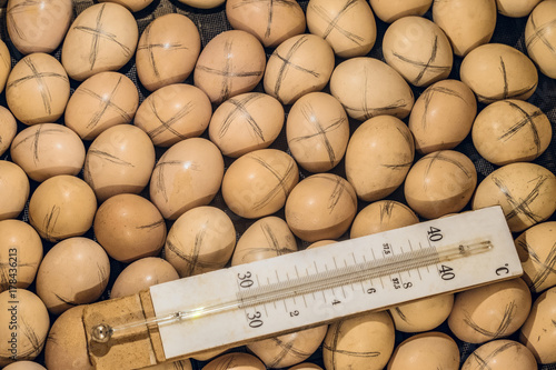 Photo Labeled chicken eggs lying in a home incubator with a temperature control thermo