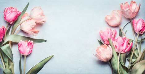 Beautiful tulips in pink pastel color on light blue background, top view, fra...