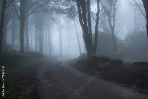 Foto op Canvas Begraafplaats Mysterious dark old forest with fog in the Sintra mountains in Portugal
