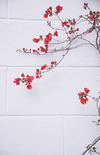 Red Flowers On White Wall
