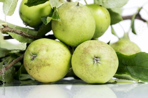 Plakat zielone jabłka