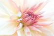 Zbliżenie na drobne różowe płatki gladioli, subtelne rozmycie.