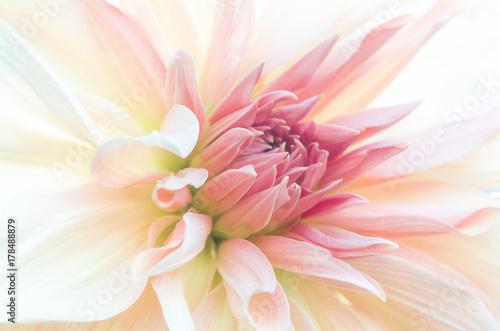 Tuinposter Dahlia Zbliżenie na drobne różowe płatki gladioli, subtelne rozmycie.