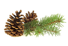 Two Pine Cones And Fir Branch ...