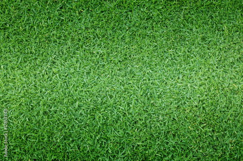 Foto op Plexiglas Weide, Moeras grass background Golf Courses green lawn