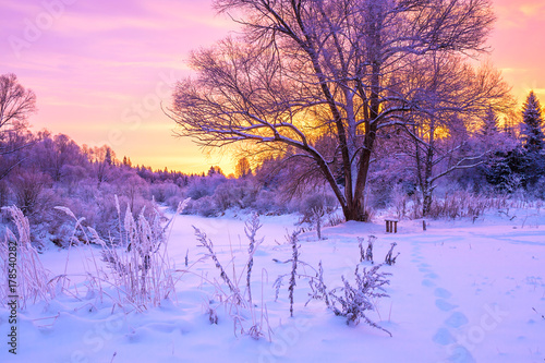 Foto op Aluminium Purper winter landscape with forest, trees and sunrise