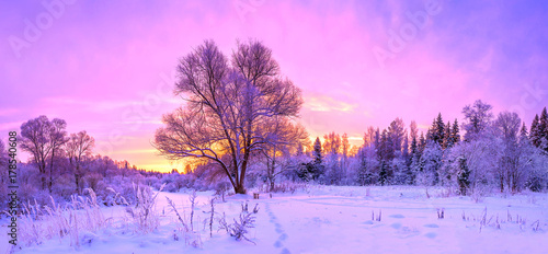 Spoed Foto op Canvas Purper winter panorama landscape with forest, trees covered snow and sunrise.