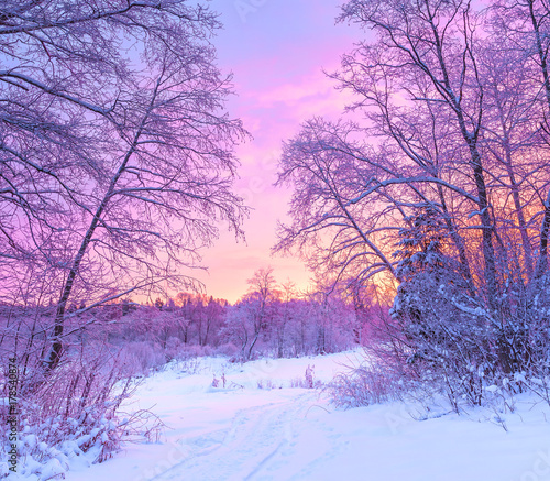 winter panorama landscape with forest, trees covered snow and sunrise