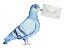 Homing Fancy Pigeon Character ...