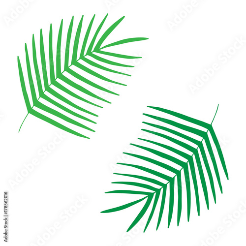 Palm Leaves Tropical Leaf Vector Illustration Doodle Drawing Isolated On White Background Buy This Stock Vector And Explore Similar Vectors At Adobe Stock Adobe Stock «#tropical #leaves #doodle #feathers #firstinawhile #be #creative #green». palm leaves tropical leaf vector