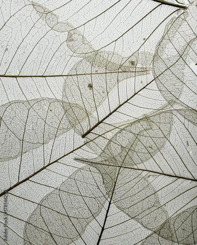 Obraz a leaf texture close up isolated on white - fototapety do salonu