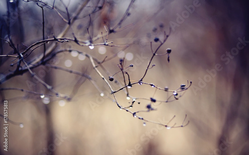 Fototapety, obrazy: Naked autumn branches in drops.